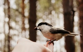 птичка, перо, крыло, орех, лето, пальцы, август, синица, перья, крылья, птица, блики, перышки