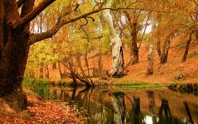 foresta, autunno, fiume, fogliame, alberi, natura