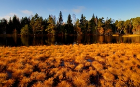 forest, river, autumn, grass, yellow