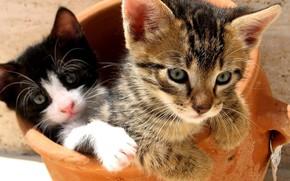кошаки, животные, радость