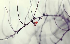 капля, дерево, лист, осень, ветки
