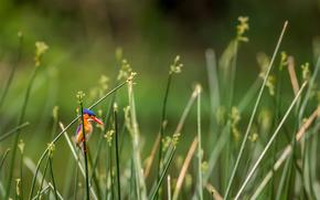 luminoso, verdura, erba, uccello