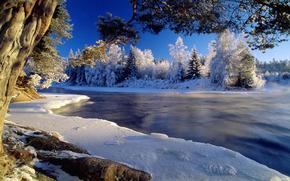 inverno, rvores, sol, angra