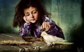 girl, cockatiel, table, spica, game, parrot, bird, piala, Art