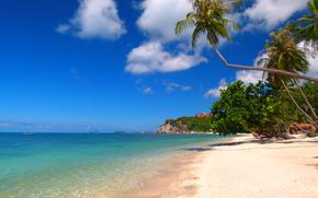 playa, arena, Palms, trpicos
