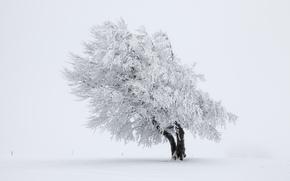 natura, neve, albero, inverno
