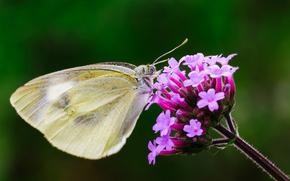 concentrer, coulisses, fleur, insecte, papillon, fond