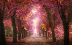 alberi, vicolo, fogliame, rosa, parco, traccia, elaborazione