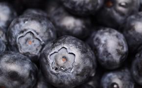 Berries, mirtilo, macro