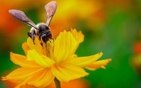 concentrer, jaune, nectar, coulisses, fleur, abeille, insecte