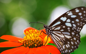 Nature, coulisses, orange, papillon, concentrer, fleur, insecte, tache