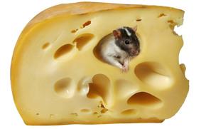 formaggio, ratto, mouse, bianco