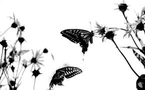 настрой, бабочки, белый
