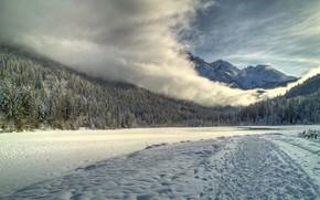 bosque, carretera, cielo, nieve, niebla, montaa, ro