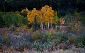 campi satinato di colore - kananaskis paese, alberta, Canada