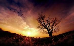 ночь, закат, солнце