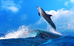 onde, nuvole, delfino, mare