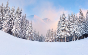 nieve, bosque, invierno, Los rboles, Montaas