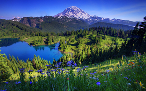 Tolmie picco, Mount Rainier National Park, Washington