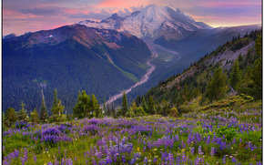 lasciare che il percorso che conduce - sunrise, Mount Rainier National Park, wa