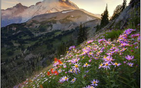 hillside color - sunrise, mount rainier national park, wa