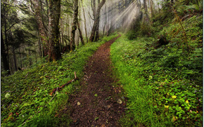 at the end of the tunnel, cascade head preserve area, oregon coast, or