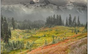 quando la caduta si trasforma in inverno, Mount Rainier National Park, wa
