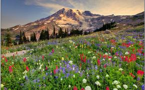 alta stagione su pi piovoso, Mount Rainier National Park, wa