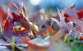 macro, nature, leaves