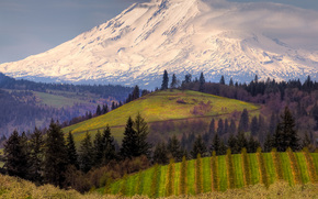 spring in the hood valley below mount adams, hood river, oregon