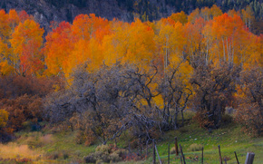 a cluster of color, fall forest fence autumn, colorado