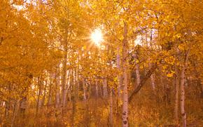 cair da floresta em toda a sua glria, Gunnison floresta nacional, co