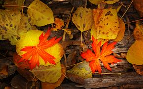 macro leaves, fall dispersed, ohio pass, colorado