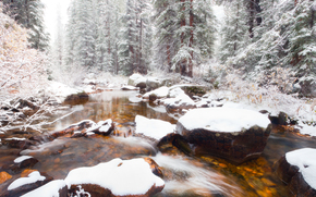 winter has arrived for this creek - independence pass, aspen, colorado