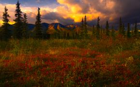 un filet de lumire de la tempte, Denali National Park, Alaska