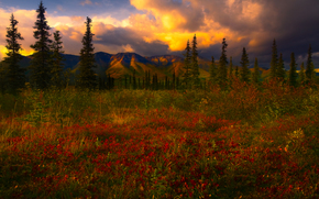 a sliver of storm light, denali national park, alaska