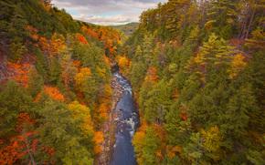 gola quecee in autunno, Vermont, Stati Uniti d'America