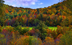 fields of gold und grn, vermont, USA