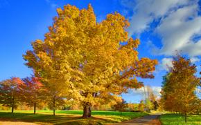 scoppio di colore giallo, Vermont, Stati Uniti d'America