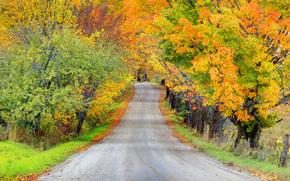 rollercoaster attraverso autunno, Vermont, Stati Uniti d'America
