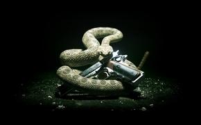 serpente, arma, Sfondo nero, freddo