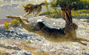 Chase, picture, predator, hunting, Art, hare, wolf, animals