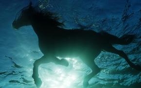 лошадь, конь, вода, заплыв