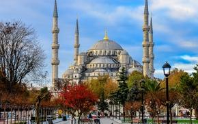 Turquie, lumires, Mosque du Sultan Ahmet, Istanbul, arbres, La Mosque Bleue, carr