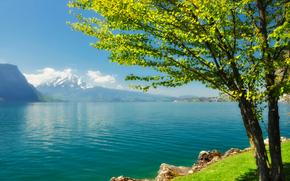 côte, lac, rivière, arbre, ensoleillé, Montagnes