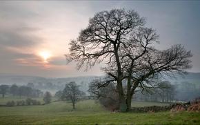 paesaggio, Bolton Abbey, inghilterra