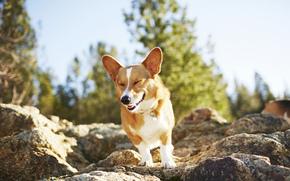пёс, собака, настроение, камни