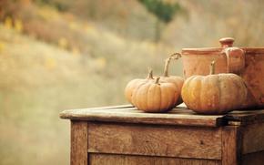 pan, harvest, vegetables, nature, Pumpkin