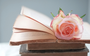 rose, pink, Books, flower, page