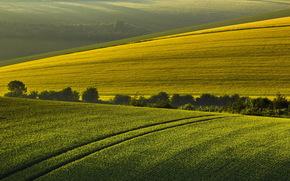 morning, field, summer, Hills, landscape